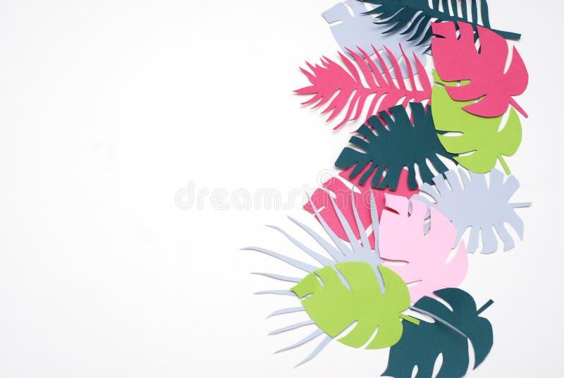 Albero esotico tropicale Isoalted delle foglie verdi della palma su fondo bianco Immagine quadrata Holliday Patern Template Leaf fotografia stock