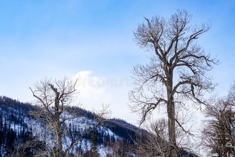 Albero favoloso con i rami annodati fotografie stock libere da diritti