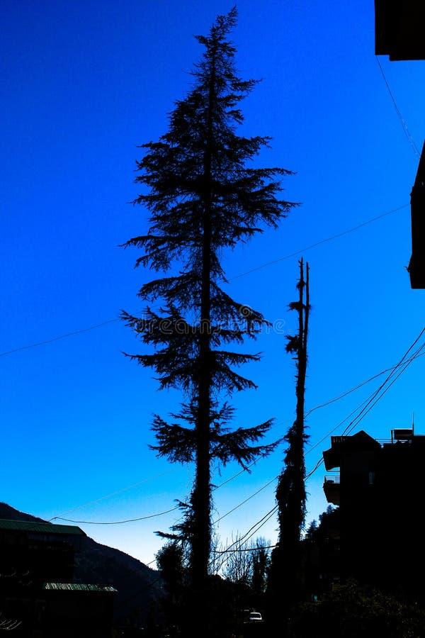 Albero fine enorme a letto delle montagne fotografia stock