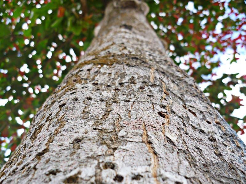 albero, foresta, natura, petti, corteccia, legno, verde fotografia stock