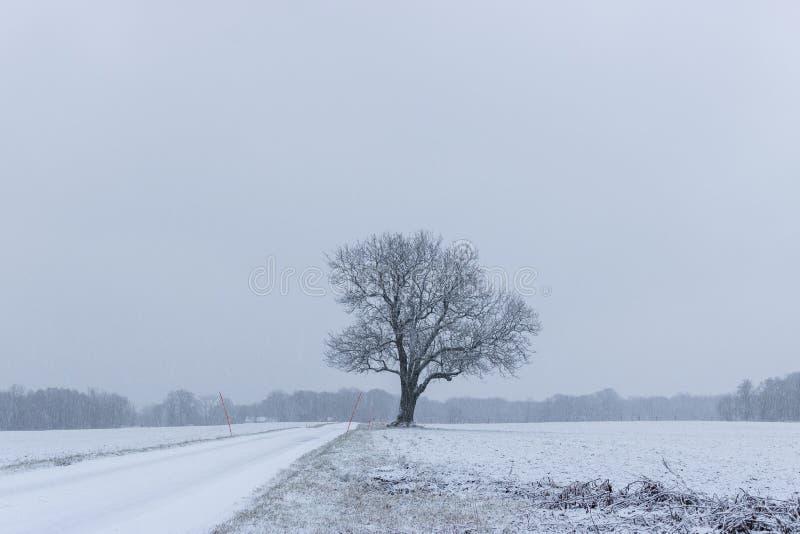 Albero in forte nevicata fotografia stock