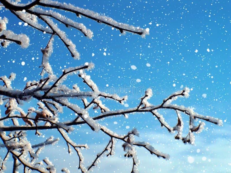 Albero gelido in neve immagini stock libere da diritti