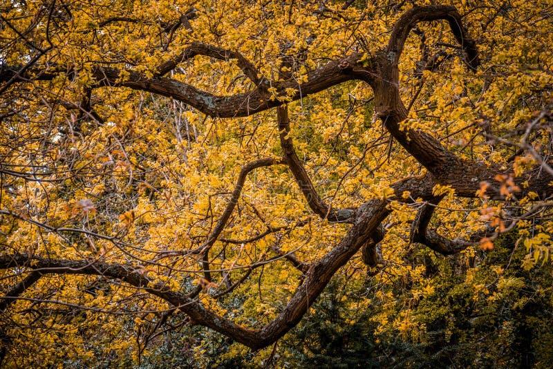 Albero giallo della molla fotografie stock libere da diritti