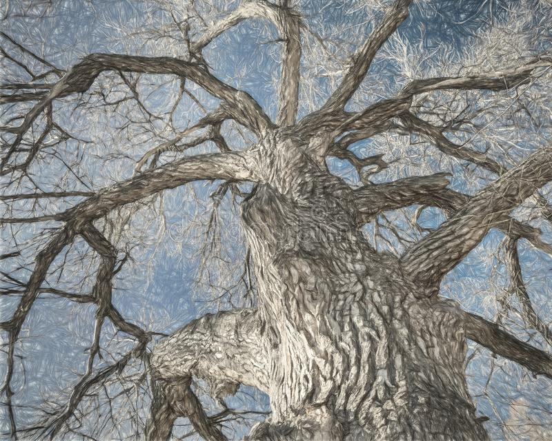 Albero gigante del pioppo nell'inverno illustrazione di stock