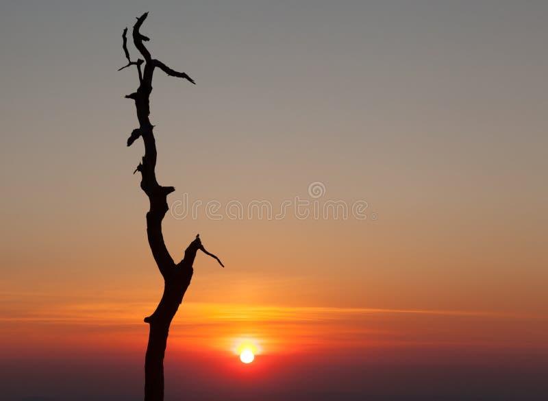 Albero Gnarled sull'azionamento dell'orizzonte nella Virginia fotografia stock