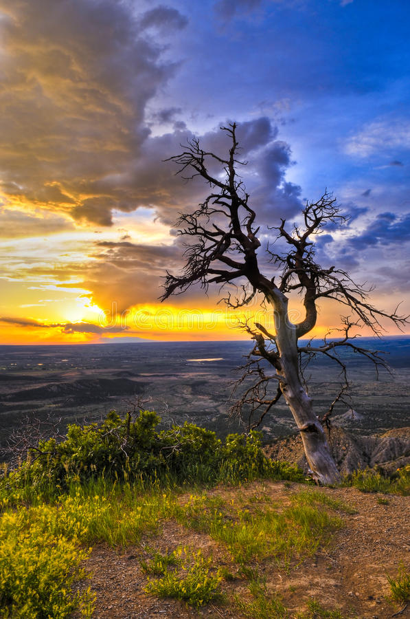 Albero guasto al tramonto fotografia stock