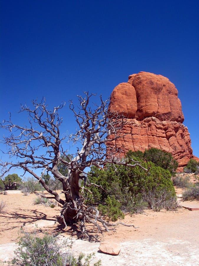 Albero guasto nell'Utah del sud. Sosta nazionale degli archi. L'Utah. fotografia stock libera da diritti