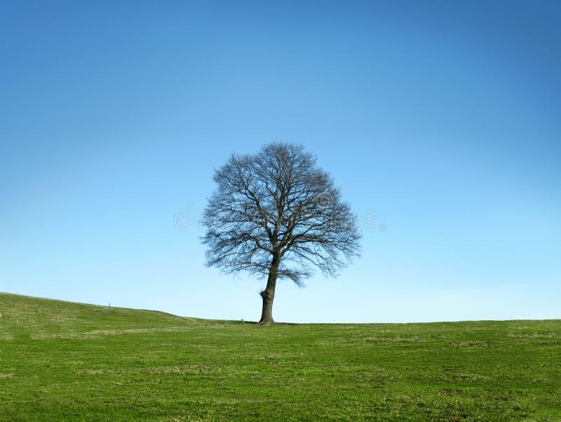 Albero il giorno della primavera o di autunno immagine stock libera da diritti