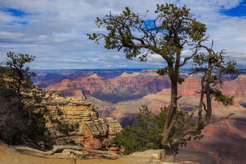 Albero impressionante sull'orlo del sud di Grand Canyon, Arizona, st unita fotografia stock