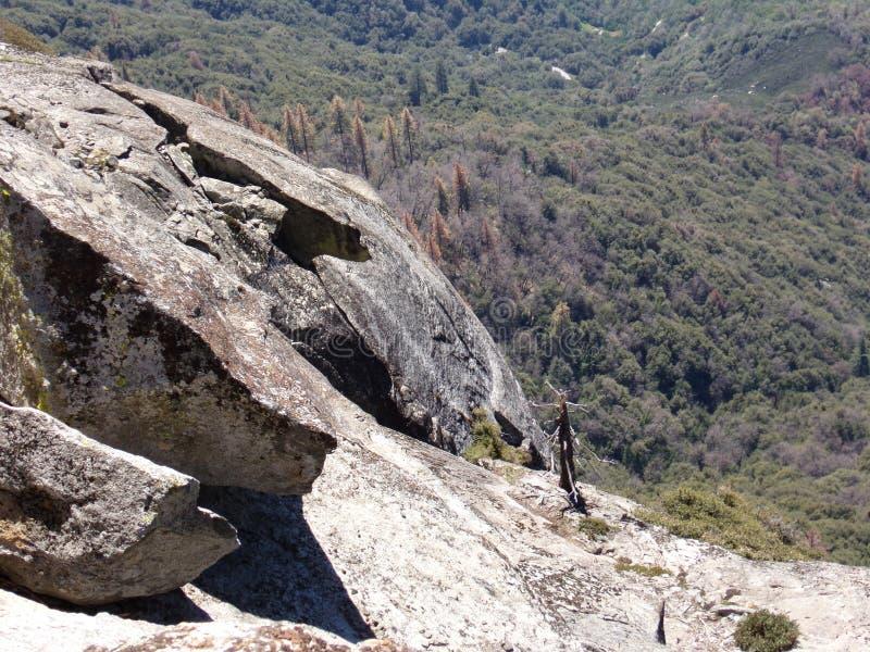 Albero inaridito solo sulla cima di Moro Rock con la sue struttura della roccia compatta, montagne di trascuratezza e valli - par immagine stock libera da diritti
