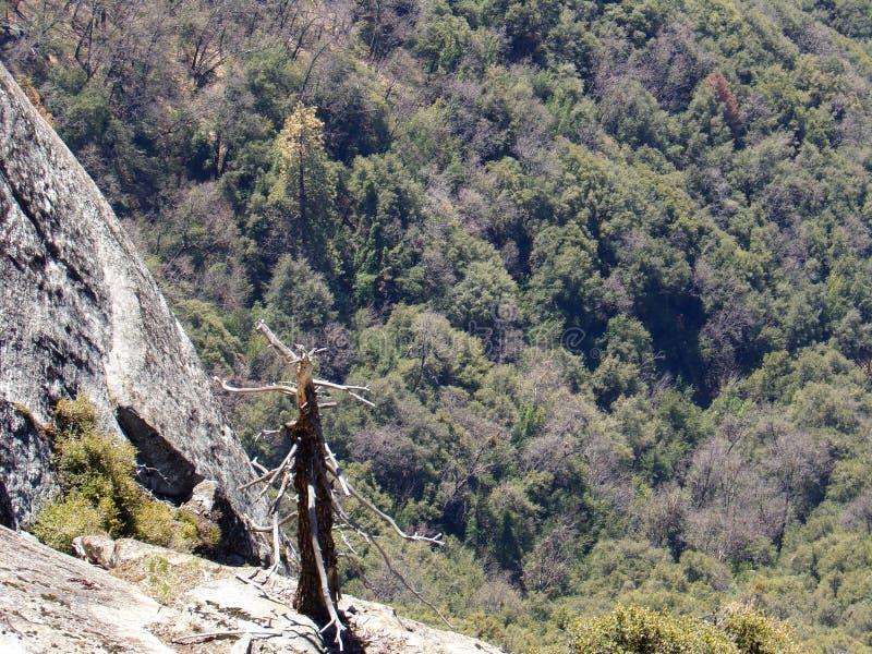 Albero inaridito solo sulla cima di Moro Rock con la sue struttura della roccia compatta, montagne di trascuratezza e valli - par fotografia stock libera da diritti