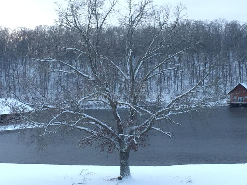 Albero invernale fotografie stock