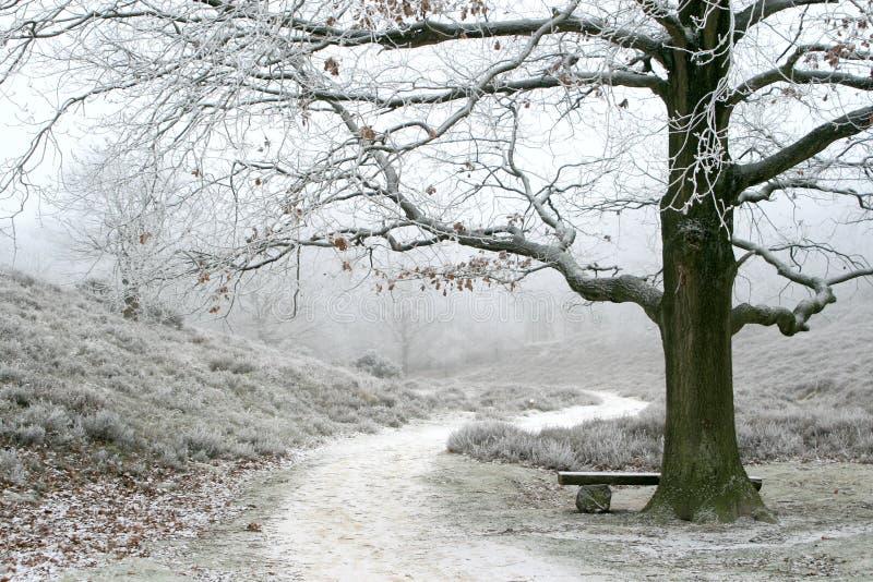 Albero invernale nebbioso di quercia e di paesaggio fotografia stock libera da diritti