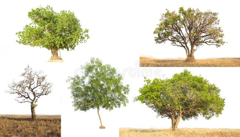 Albero isolato contro la a sopra fondo bianco fotografia stock libera da diritti