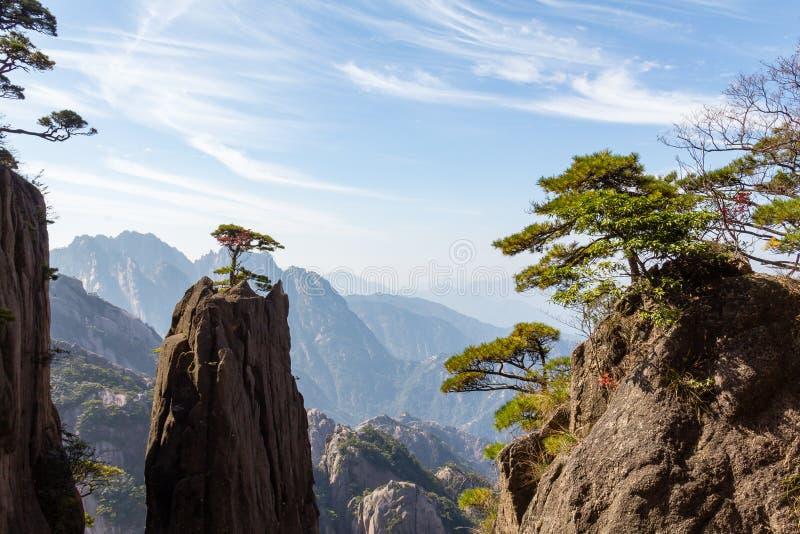 Albero isolato in Grand Canyon del mare ad ovest sul Mt Huangshan, Cina immagine stock libera da diritti