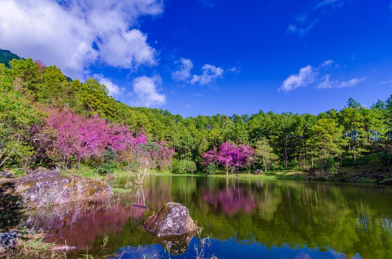 Albero Khun Wang Inthanon Chiang Mai Thailand del lago fotografia stock