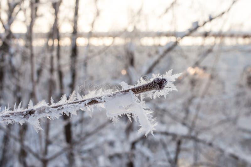 Albero leggiadramente cristallizzato brina su un ramo di un albero i immagine stock