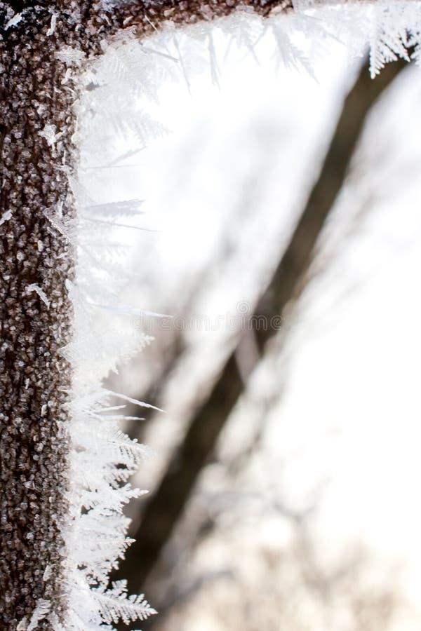 Albero leggiadramente cristallizzato Fondo di Wintr fotografie stock