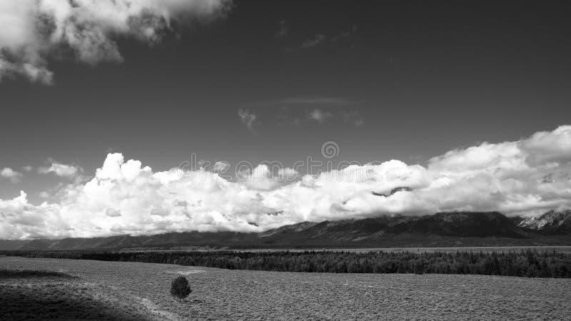 Albero lungo del grande parco nazionale di Tetons immagine stock