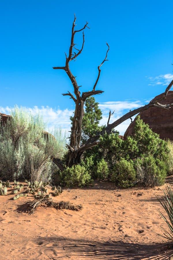 Albero morto in arché parco nazionale, Utah fotografia stock