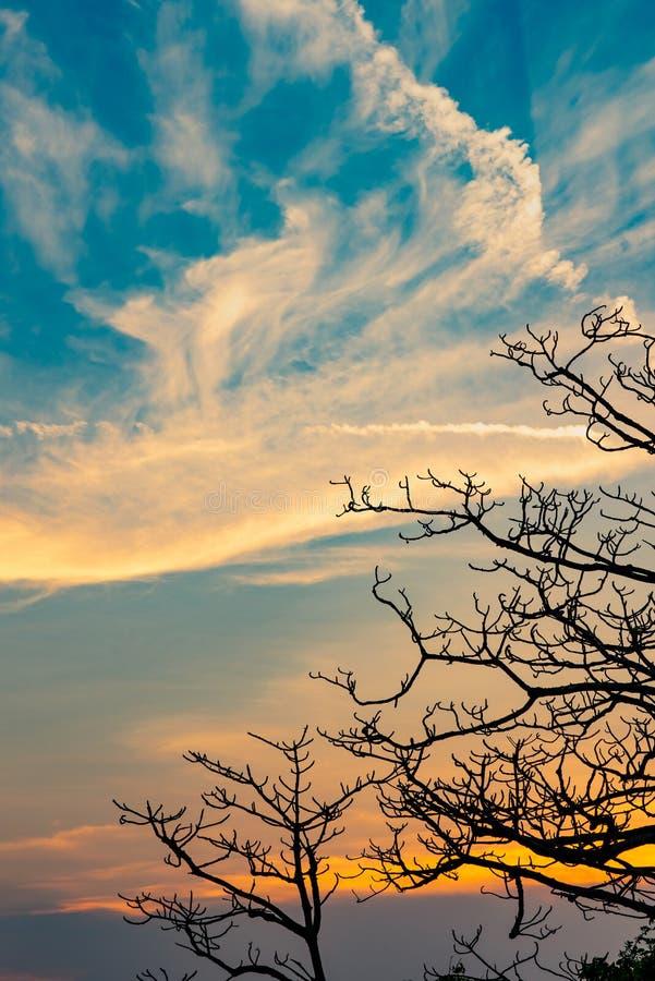 Albero morto della siluetta sul bello tramonto o alba sul cielo dorato Fondo per il concetto pacifico e tranquillo Luce per spera fotografie stock