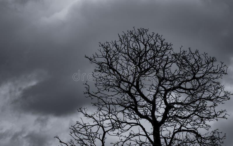Albero morto e ramo di silhouette sullo sfondo del cielo grigio rami neri dell'albero Sfondo di trama della natura Contesto artis immagine stock