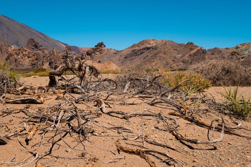 Albero morto e vegetazione gocciolante nel deserto secco fotografia stock