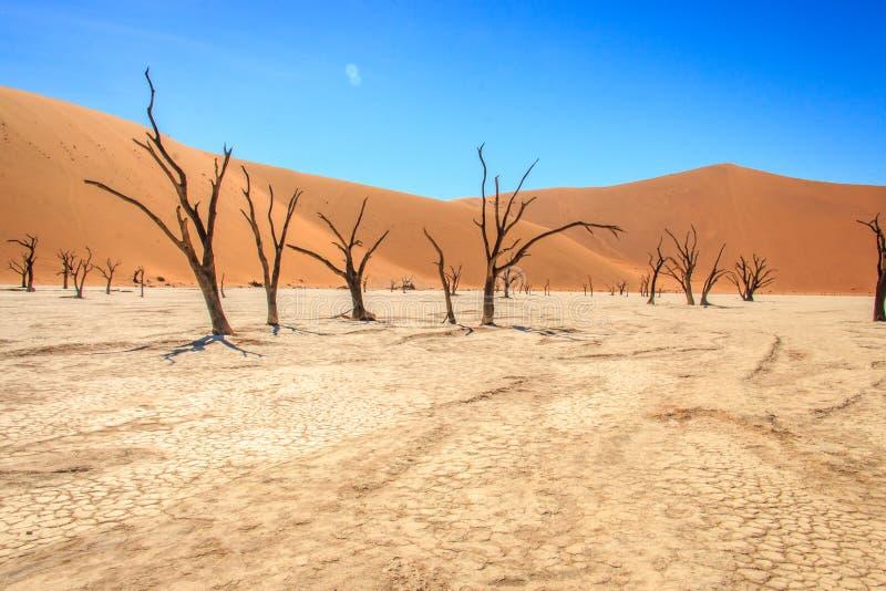 Albero morto nel deserto di Sossusvlei fotografia stock