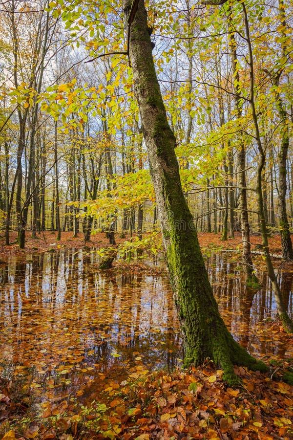 Albero muscoso in foresta fotografia stock