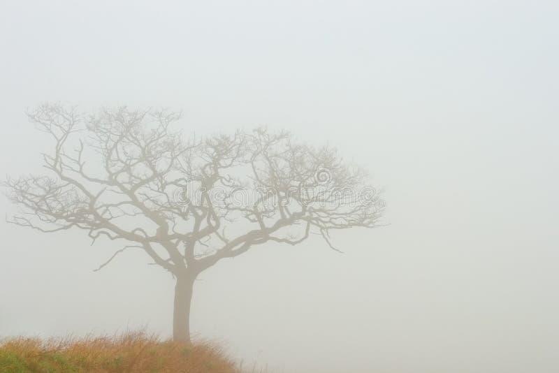 Albero nebbioso fotografie stock libere da diritti