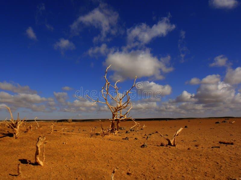 Albero nel deserto fotografia stock