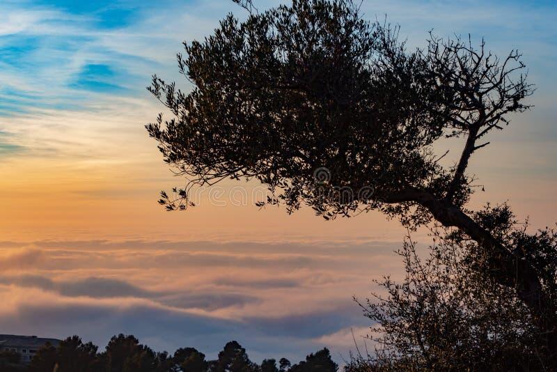 Albero nel mare delle nuvole immagine stock