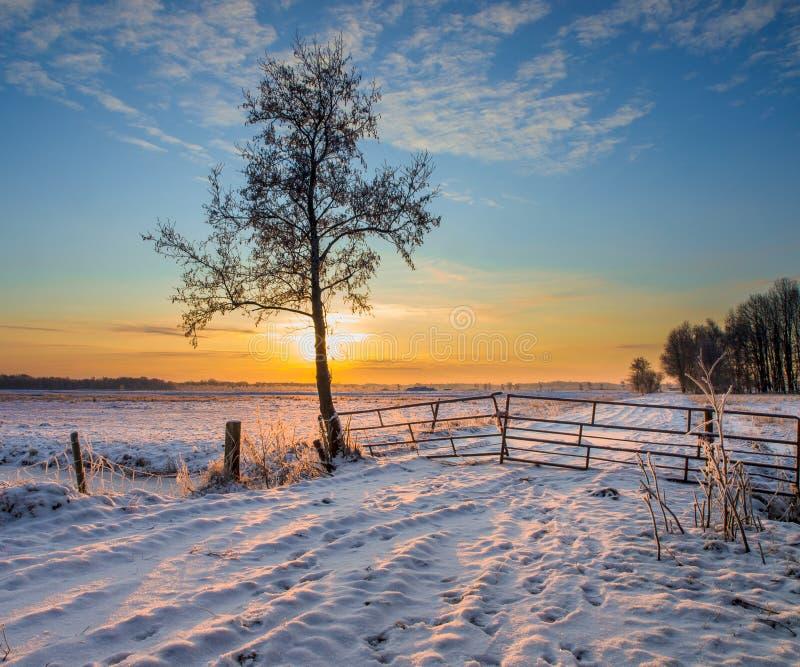 Albero nel paesaggio di inverno fotografia stock