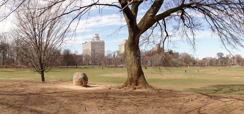 Albero nel parco di prospettiva a Brooklyn, New York City immagini stock libere da diritti