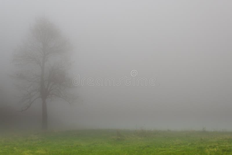 Albero nella nebbia fotografia stock libera da diritti