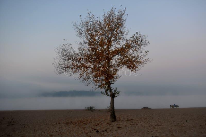 Albero nella nebbia fotografie stock libere da diritti