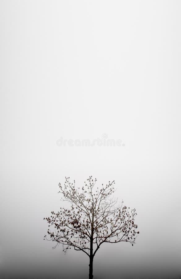 Albero nella nebbia - priorità bassa di autunno fotografia stock libera da diritti