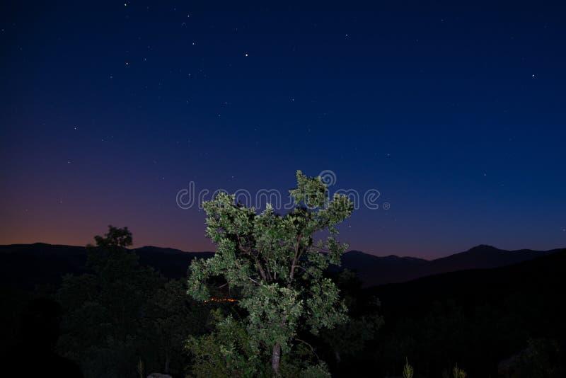 Albero nelle montagne durante il tramonto immagini stock