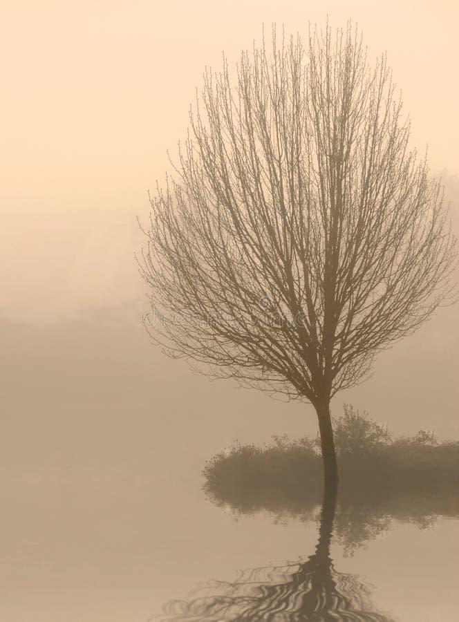 Albero nudo in nebbia all'alba immagine stock