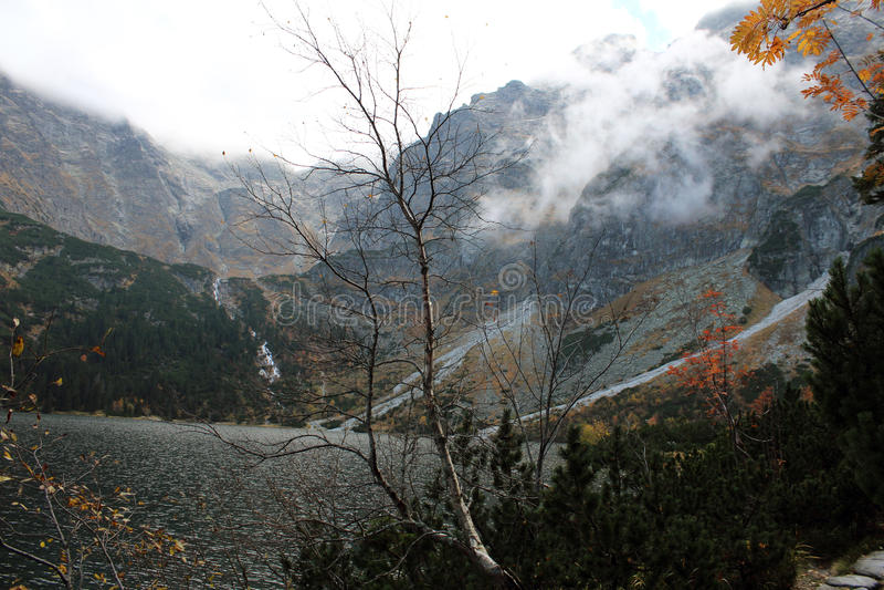 Albero nudo nelle montagne fotografia stock libera da diritti
