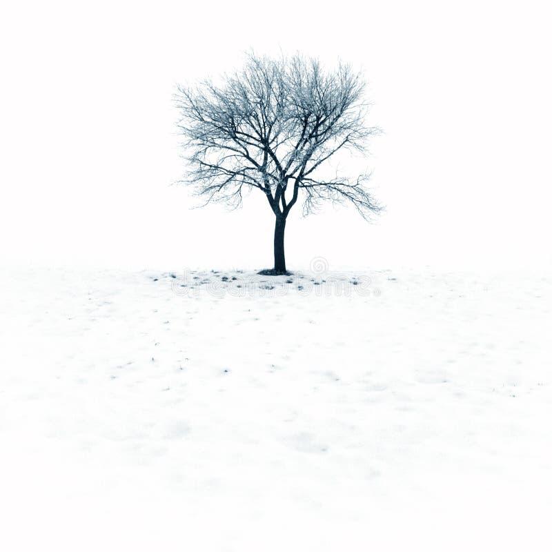Albero nudo in neve fotografie stock libere da diritti