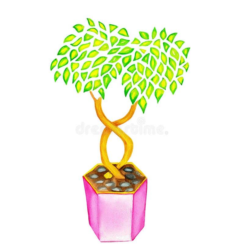 Albero o cespuglio negli acquerelli e nei pensils rosa del vaso fotografia stock libera da diritti