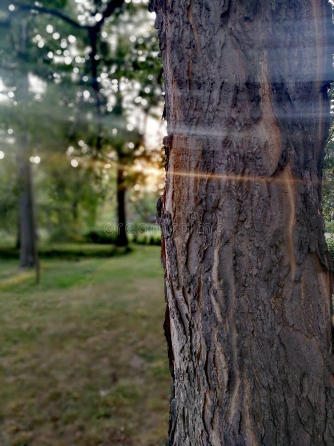 Albero in parco immagini stock libere da diritti