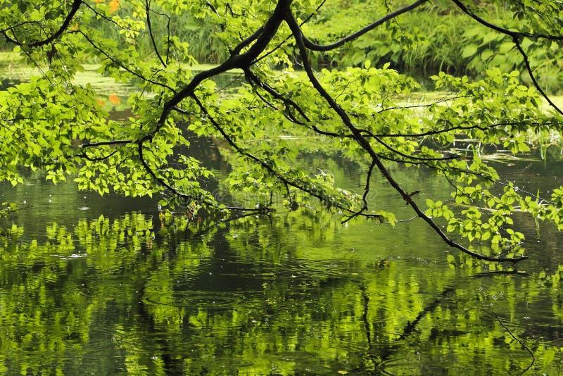 Albero in parco riflesso in stagno fotografie stock