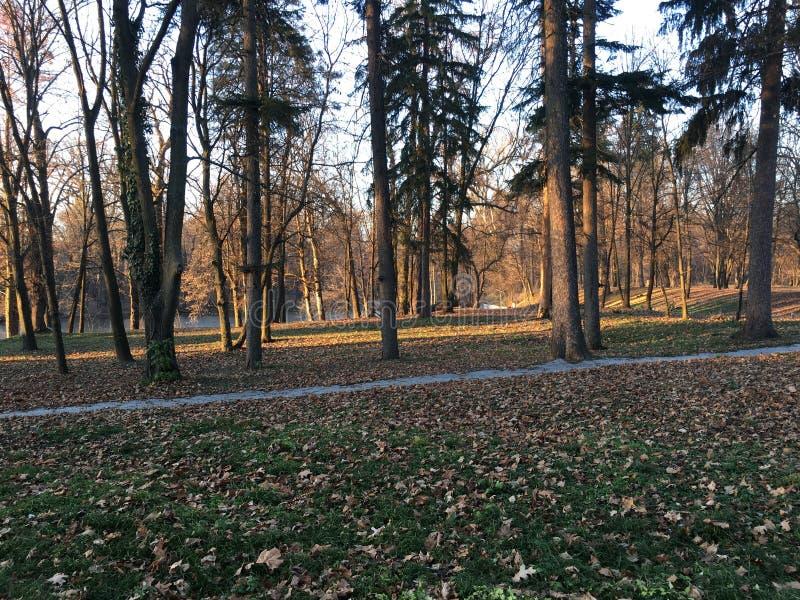 albero in parco su tempo di caduta immagini stock
