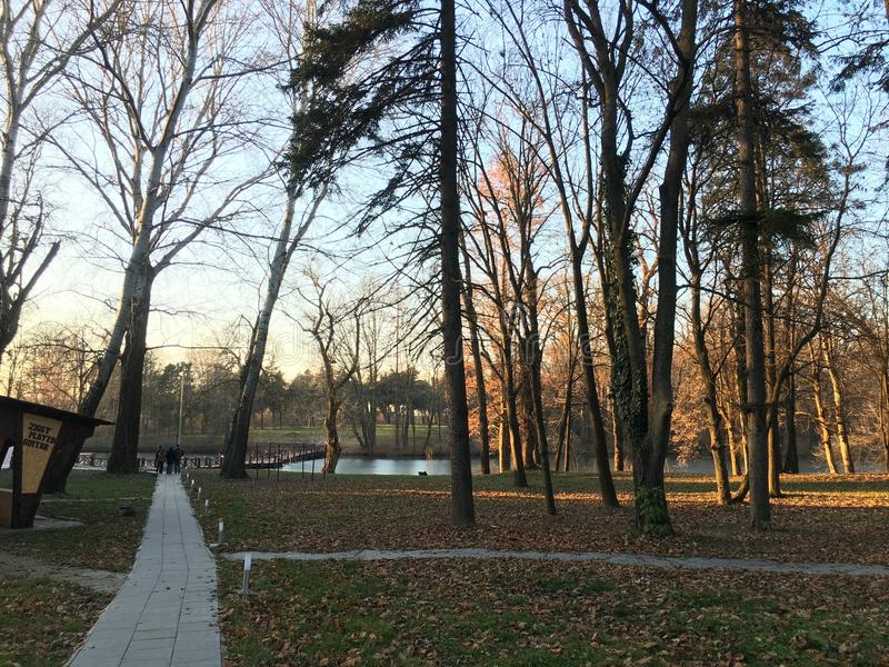 albero in parco su tempo di caduta fotografia stock libera da diritti