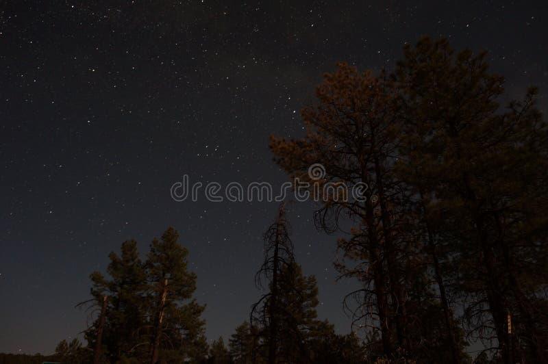 Albero per bandiera del cielo di notte immagine stock libera da diritti