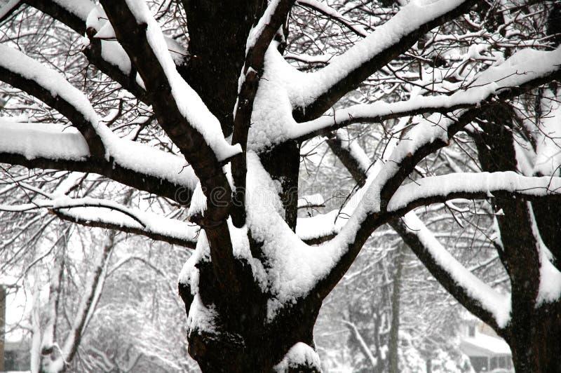 albero in pieno di neve nell'inverno fotografia stock
