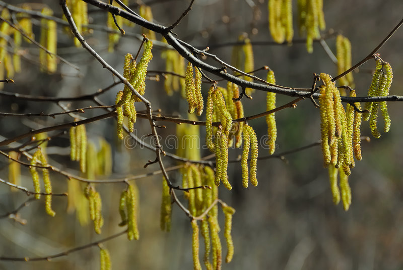 Albero in primavera no.1 immagini stock libere da diritti