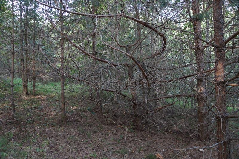 Albero sconosciuto in foresta fotografia stock libera da diritti